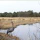 Hamberger Moor retten