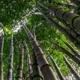 Bambuszahnbürstenset