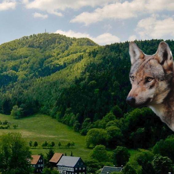 Exklusive Forschungsreise zu den Wölfen in die Lausitz
