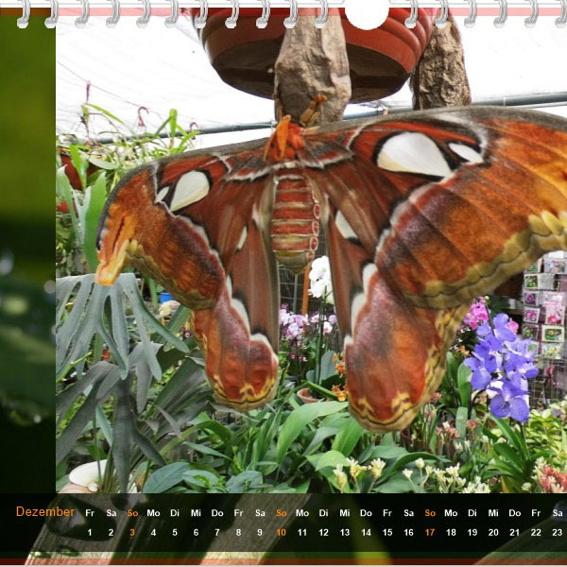Schmetterlings-Kalender 2017