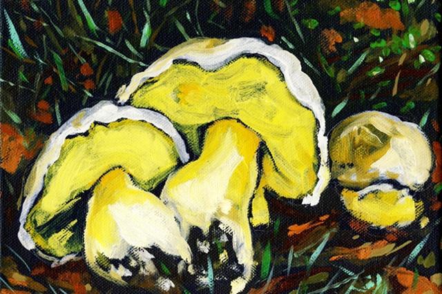 Mushroom of the Day / Katalog