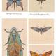 Steambugs - Das Poster