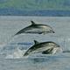6 Whale-Watching-Touren auf den Azoren + Danksagung
