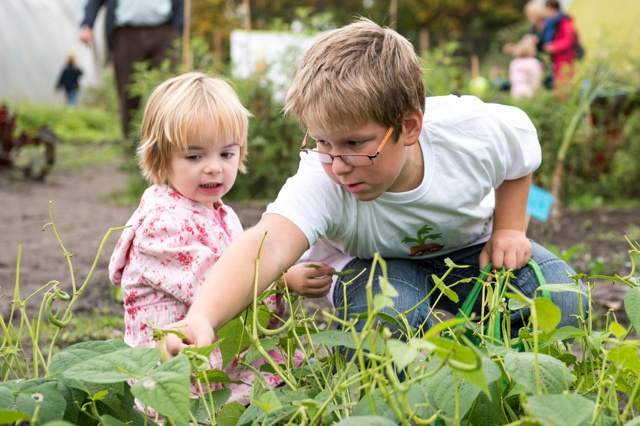 GemüseAckerdemie - Ackern schafft Wissen