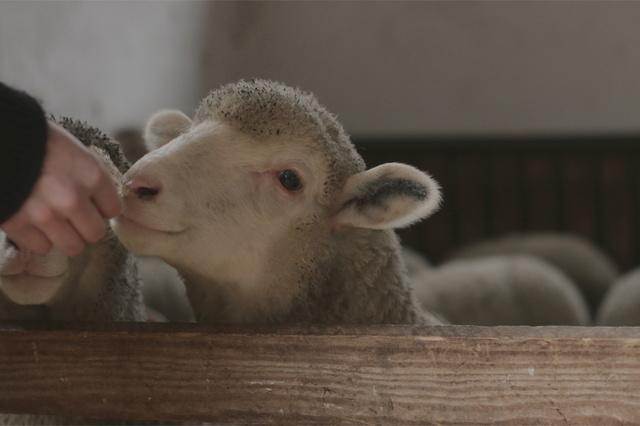 Schaf&Schäfer - weil Wolle mehr wert ist.