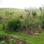 Führung durch die junge Gartenlandwirtschaft - mit Mittagessen