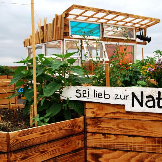 """Jungpflanze aus dem Klunkergarten + eine """"SexyLimo"""" von der Klunkerkranich-Gartenbar"""