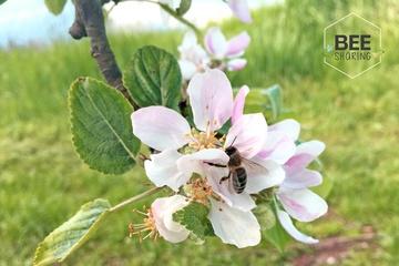Beesharing Bienencontainer