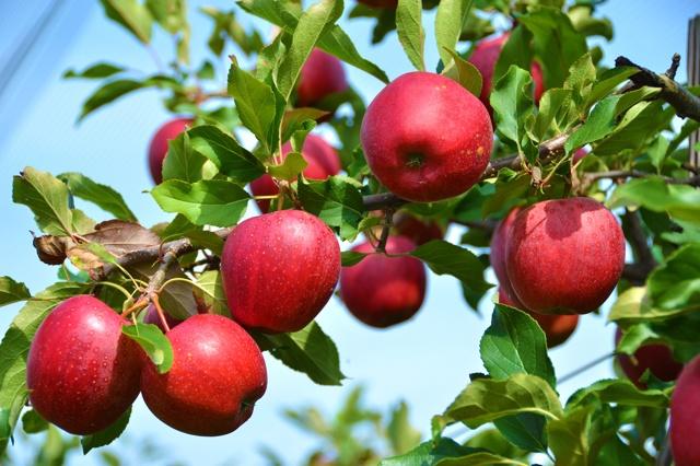Mobile Mosterei für Saft aus eigenen Früchten