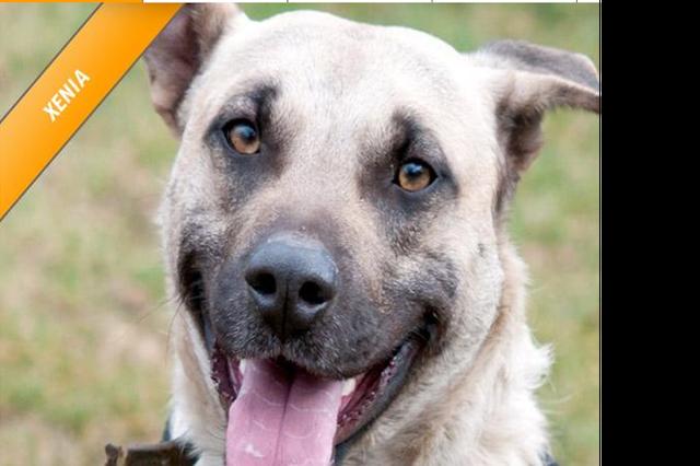 Ein neues Zuhause für Tierheimtiere - Tierheimhelden