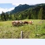 Bio Weide-Beef aus Sibratsgfäll (5k Fleischpaket)
