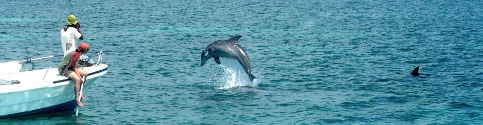 Dolphin language -Wie kommunizieren Delfine & wie entstand unsere Sprache?
