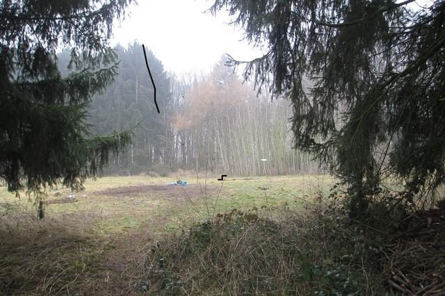 Energiewald