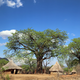 """Experience the Magic of Baobab"" trip"
