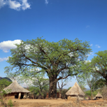 "Reise ""Experience the Magic of Baobab"""
