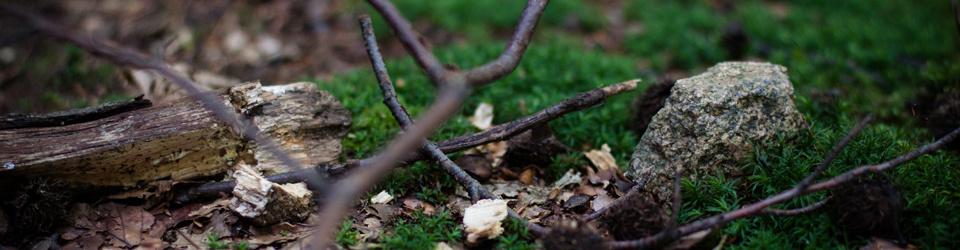 Wurzeln, Dreck und Steine