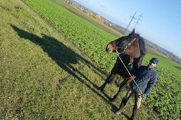 Zukunft Holzrücke Pferd