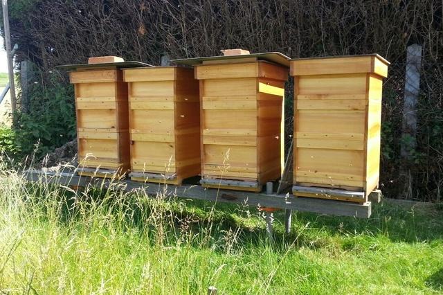 Bienenheimat