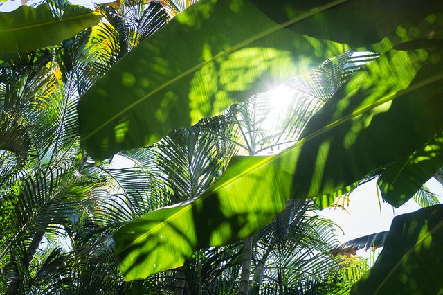 Buch: Auslandssemester Costa Rica