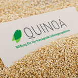 Quinoa-Samen