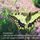 3 exklusive Fotokarten mit passendem Gedicht