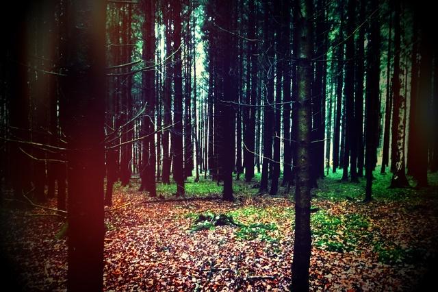 'Wald der Worte' - Spielfilm Mystery - Thriller