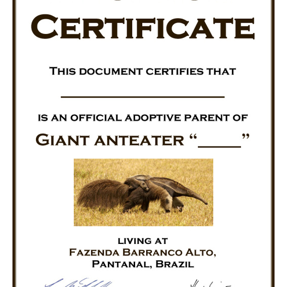 Namenspatenschaft + Kalender + Blog & Album + Urkunde mit Ameisenbärenhaar