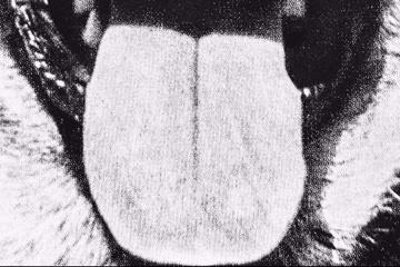 Schäferhund-Hoax