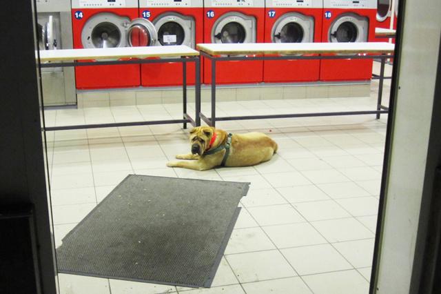 Wartende Hunde. Ein Buch über die Treue
