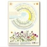 "Plakat ""Wildbienennahrung / Blühkalender"""