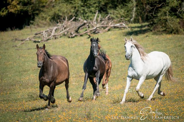 Pferdejugend in der Herde