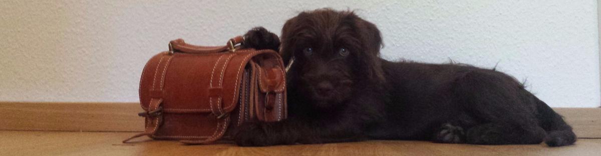 Laika und Marley sollen Schulhunde werden