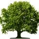 Wir pflanzen 3 Bäume für Dich + 150 Bonets