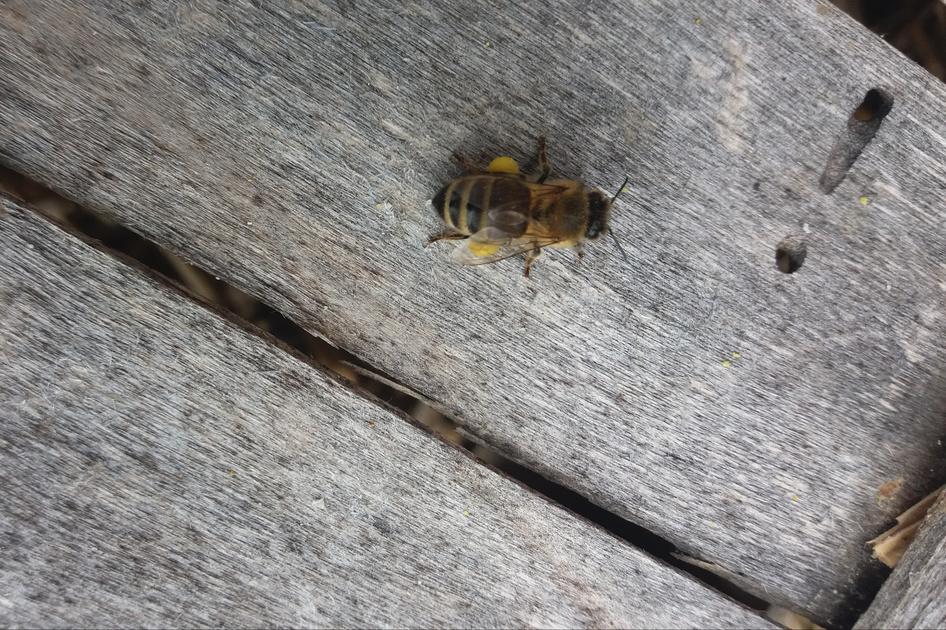 Die Bienenhüter Zukunft Für Die Bienen