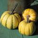 Yellow Mandan - Bio-Kürbis einer seltenen, alten Sorte