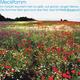"""Exclusive Postkarte """"MeckPomm""""  mit passendem Gedicht"""