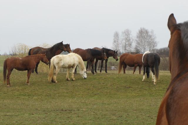 Innovation - wie intelligent sind Pferde wirklich?