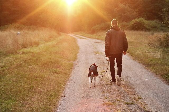 Dogsharing Deutschland