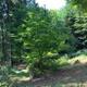 Baumpatenschaft für einen jungen Baum
