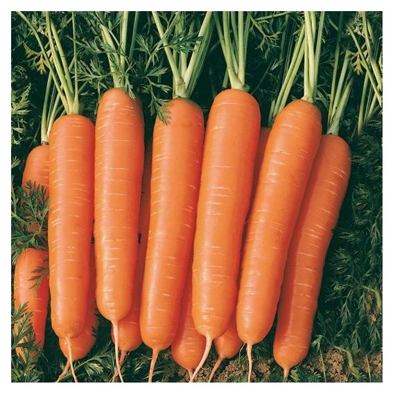 Heike's Gemüsekorb (selbstabholer)