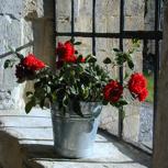 Namentlicher Eintrag auf der Spendertafel an der Orgel und einen Blumenstrauß aus dem Klostergarten.