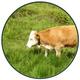 Rent A Cow + Butter/Käse aus Almmilch