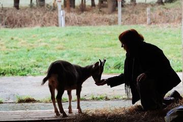 Die wendländische Konferenz der Tiere - ein Hörbuch