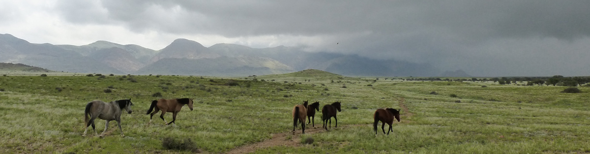 Innovative behavior of horses