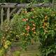 Wir pflanzen einen Baum im Lassaner Winkel und laden euch zum 1. Sommerfest ein.