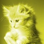 Kitty Spirit
