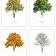 Arboretum-Baumportraits, Jahreszeitenserie, 4 Artprints 70 x 50 cm