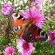 Gruß aus dem Bienengarten
