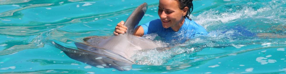 Dolphinternet