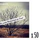 50 CDs für Wiederverkäufer oder Großverschenker
